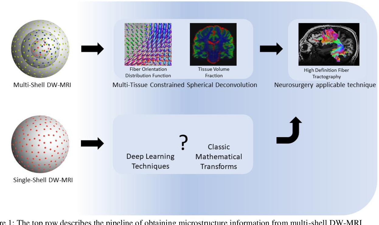 Figure 2 for Deep Learning Estimation of Multi-Tissue Constrained Spherical Deconvolution with Limited Single Shell DW-MRI