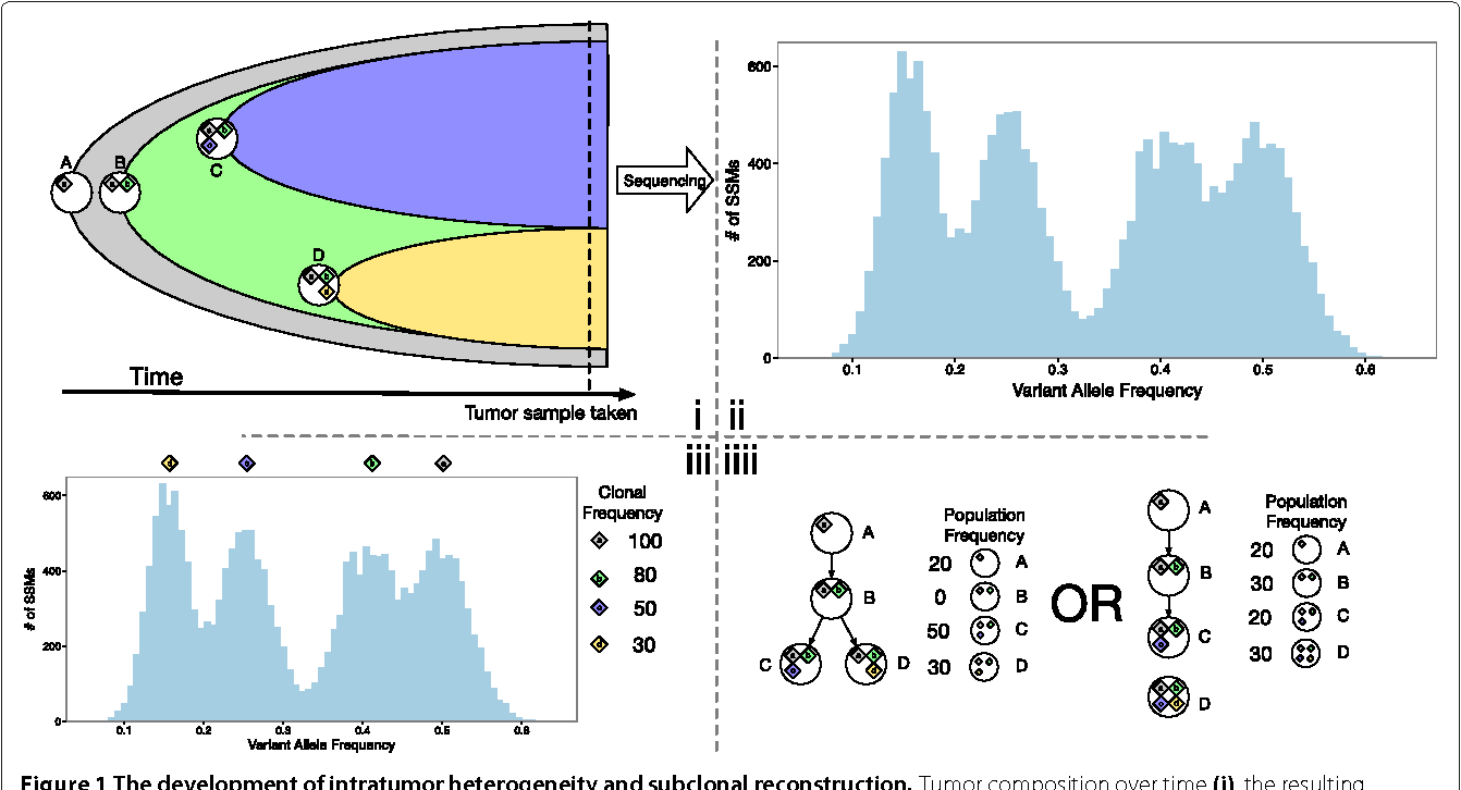 Figure 1 for Reconstructing subclonal composition and evolution from whole genome sequencing of tumors