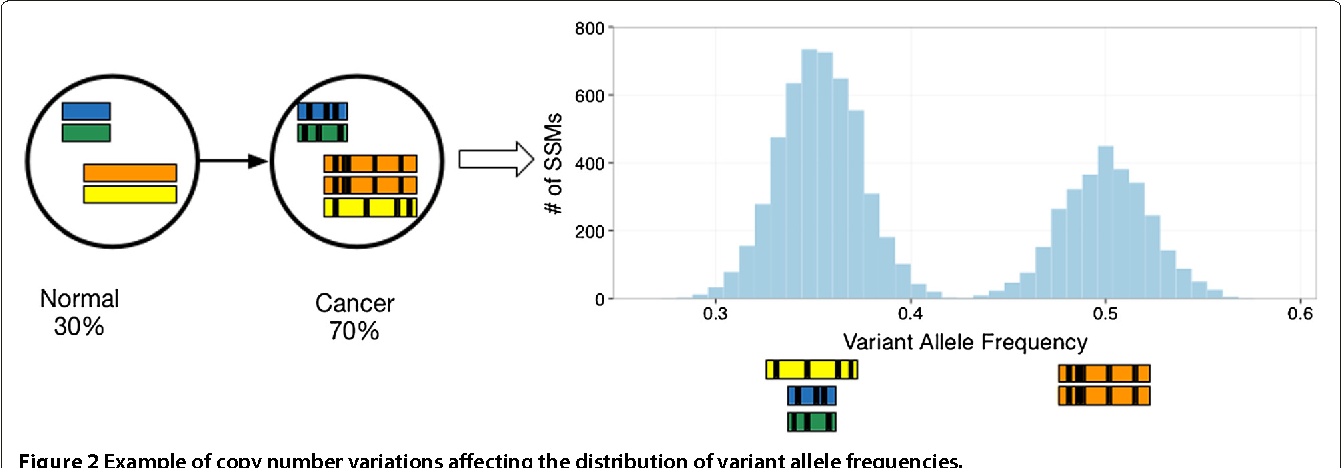 Figure 3 for Reconstructing subclonal composition and evolution from whole genome sequencing of tumors