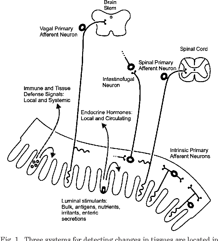 Figure 1 From Nutrient Tasting And Signaling Mechanisms In The Gut