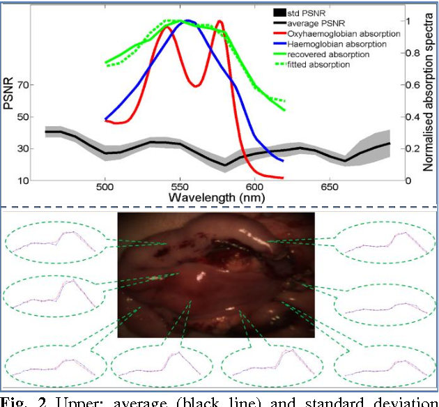 Figure 2 for Recovering Dense Tissue Multispectral Signal from in vivo RGB Images