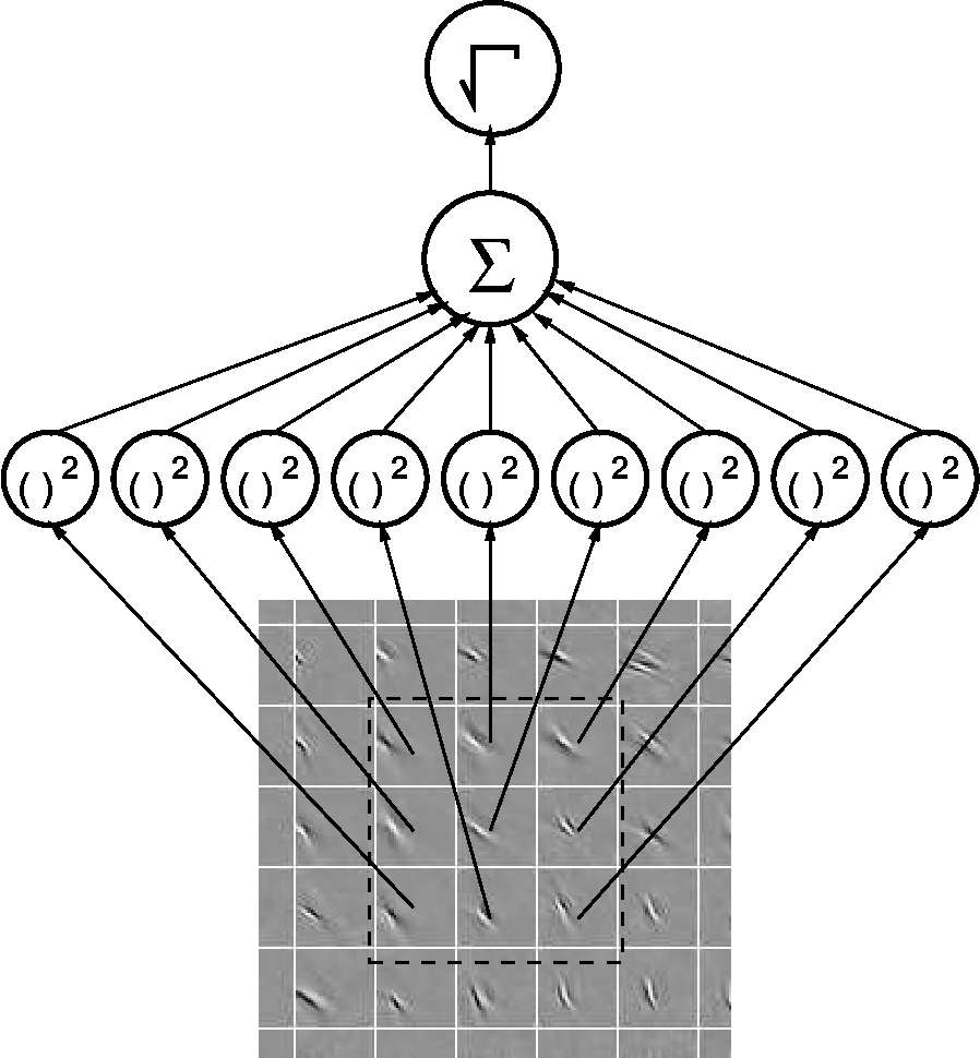 Figure 3 From Topographic Independent Component Analysis Semantic Interpreting Wiring Diagrams The Diagram Of Higher Order Feature Detectors Given By