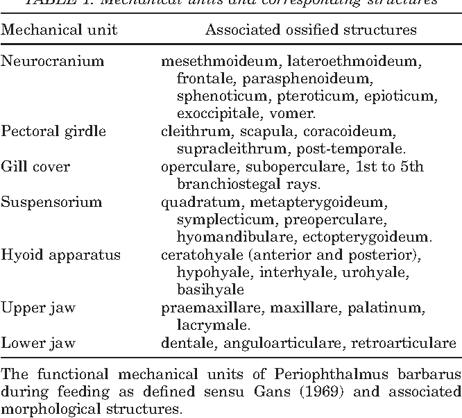 Magnificent Functional Anatomy Of The Vertebrates An Evolutionary ...