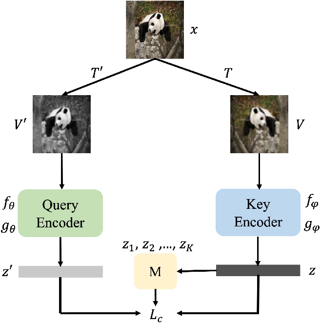 Figure 1 for Contrastive Learning with Stronger Augmentations