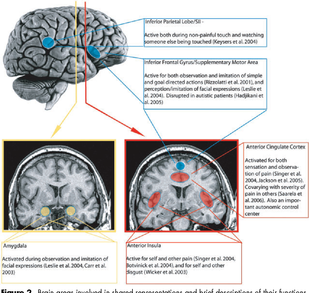 Brain Representations Of Social >> Figure 2 From The Need For A Cognitive Neuroscience Of Naturalistic