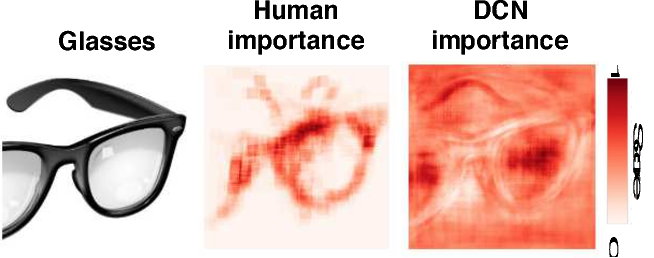 Figure 1 for What are the visual features underlying human versus machine vision?