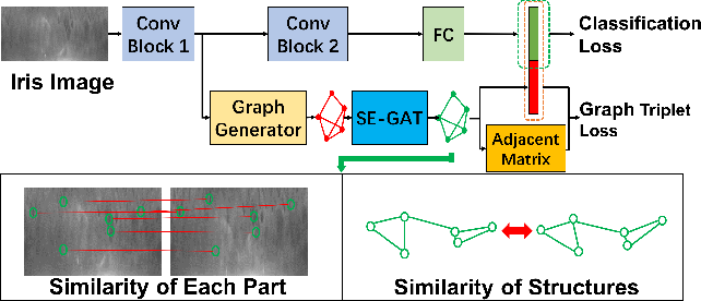 Figure 3 for Dynamic Graph Representation for Partially Occluded Biometrics