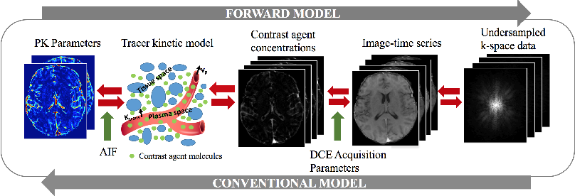 Figure 1 for Direct Estimation of Pharmacokinetic Parameters from DCE-MRI using Deep CNN with Forward Physical Model Loss