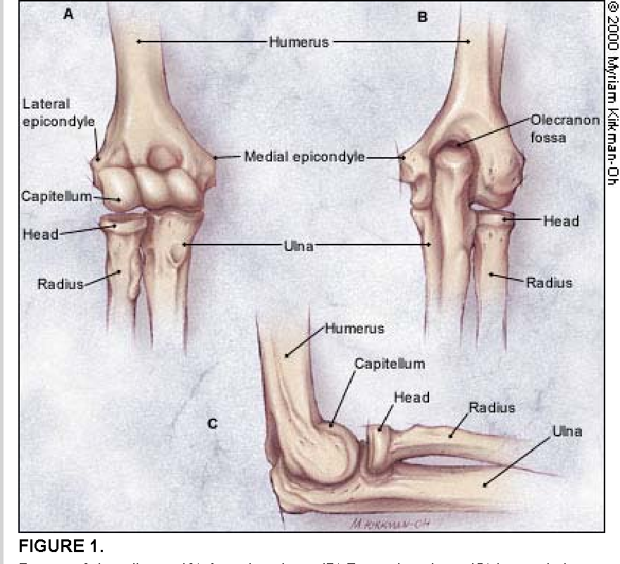 Figure 1 from Evaluation of overuse elbow injuries. - Semantic Scholar