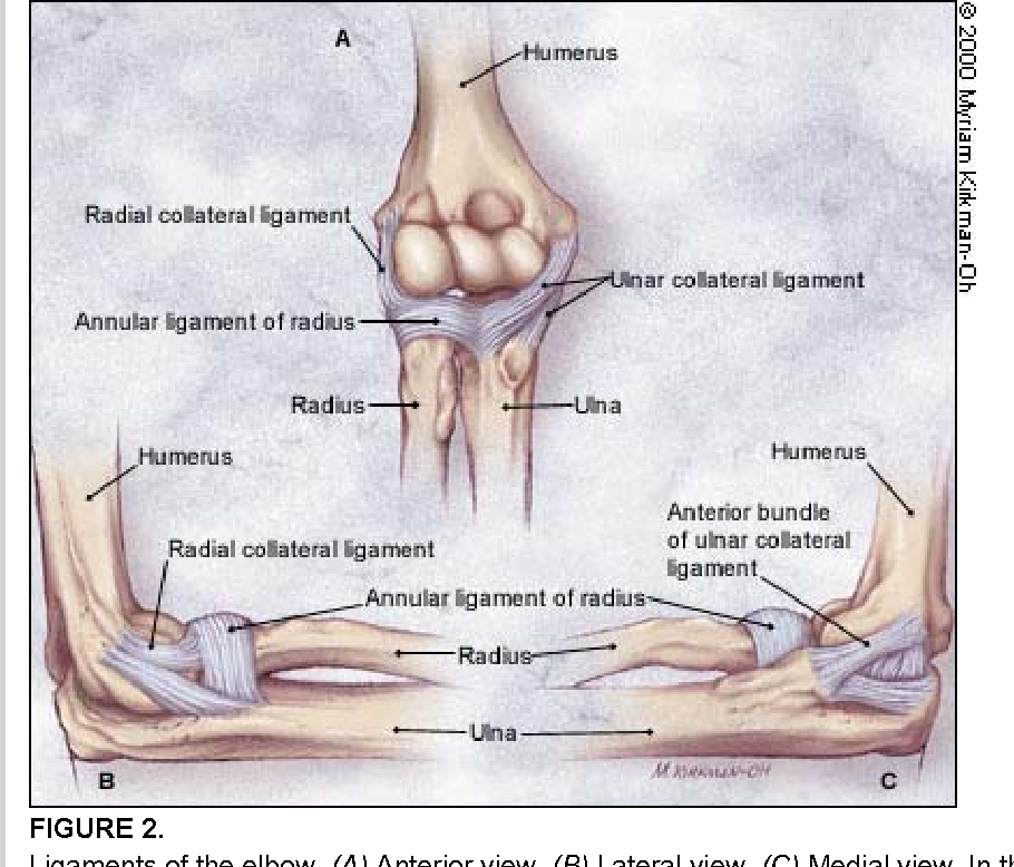Figure 2 From Evaluation Of Overuse Elbow Injuries Semantic Scholar