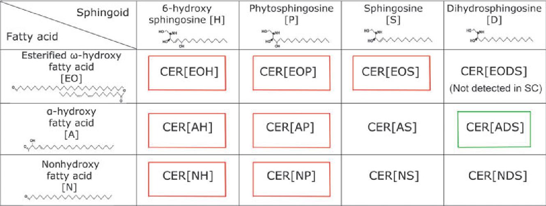 ceramide cer classes recognized in human and canine stratum corneum