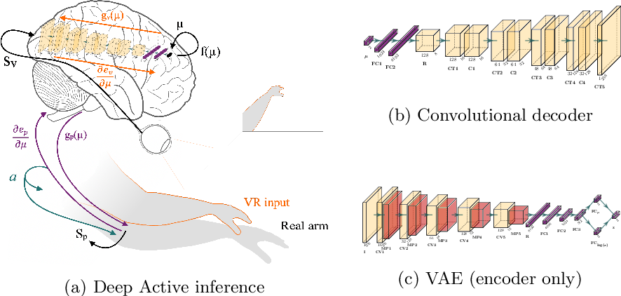 Figure 1 for A deep active inference model of the rubber-hand illusion
