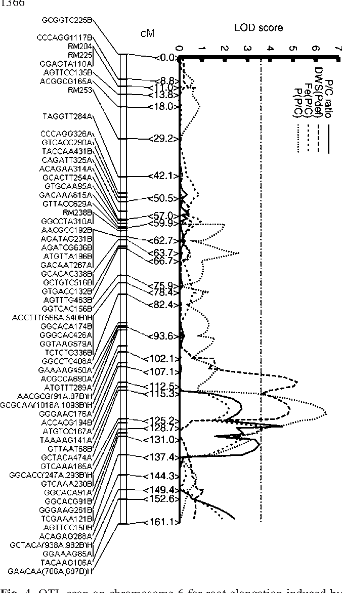 Fig. 4 QTL scan on chromosome 6 for root elongation induced by phosphorus deficiency (P/C ratio) and associated traits such as dry weight of shoots under phosphorus deficiency [DWS(Pdef)], relative iron content in shoots [Fe(P/C)], and relative phosphorus content in shoots [P(P/C)]. Maximum threshold LOD score of 3.57 among the four traits (Table 2) is indicated as a dotted line
