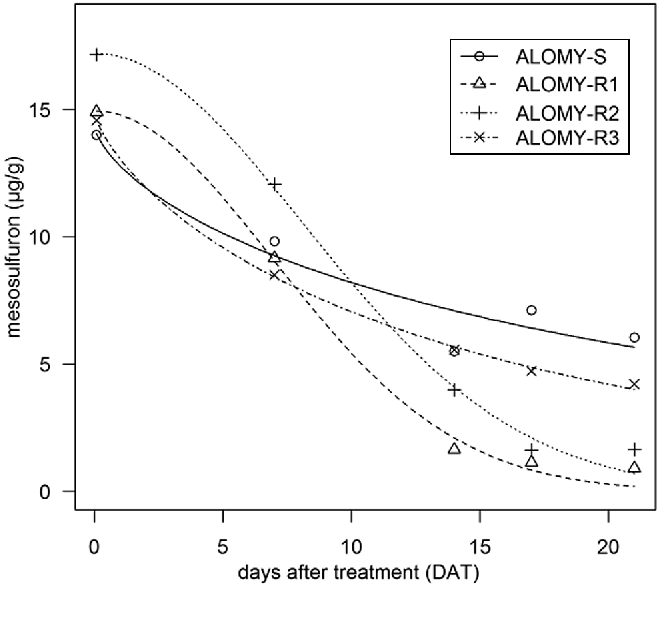 Fig. 5 Degradation of mesosulfuron in the populations ALOMY-S, ALOMY-R1, ALOMY-R2 and ALOMY-R3 between 0.08 and 21 days after treatment