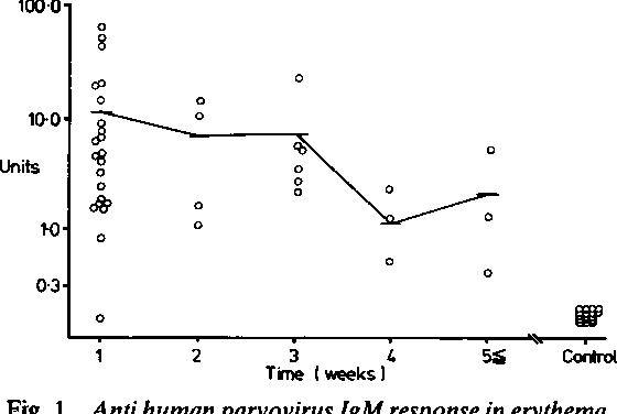 figure 1 from detection of antibodies to human parvovirus in rh semanticscholar org