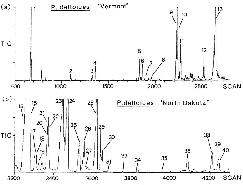 """Fig. 2. (a) Total ion chromato gram (TIC) of bud exudate from Populus deltoides """"Vermont"""", scans 500-2800 (MU 11-22). This region is atypical of the P. deltoides exudates analyzsed, having more compounds in the MU 11 - 22 region than do other exudates, (b) TIC of bud exudate from Populus deltoides """"North Dakota"""", scans 3200-4300 (MU 24-33). This region is typical of the majority of the P. deltoides exudates analyzed. Identifica tions of numbered peaks are given in Table II."""