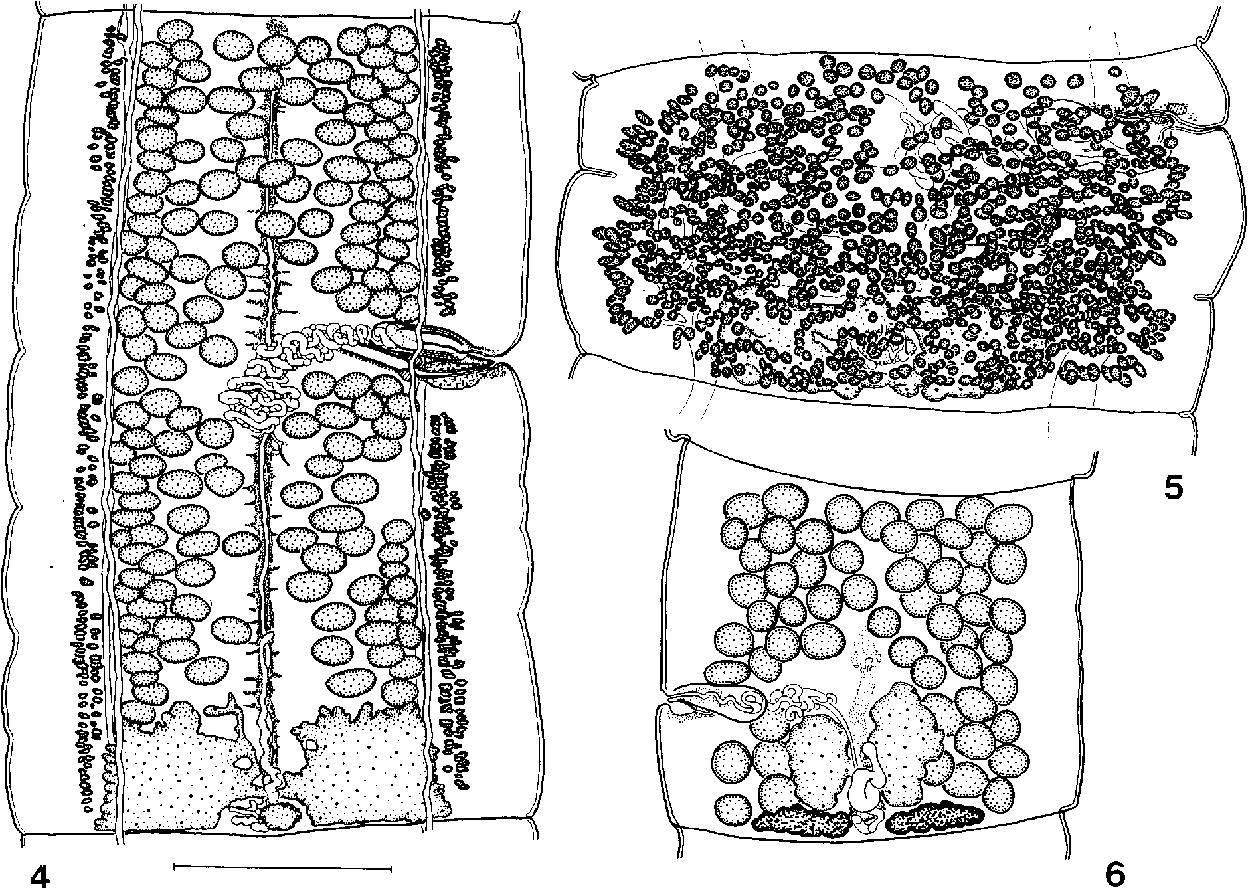 figure 4–6
