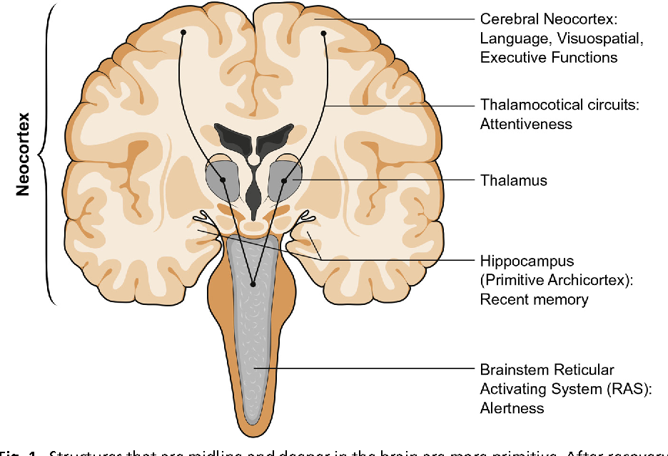 Figure 1 from Clinical evaluation of early cognitive symptoms ...