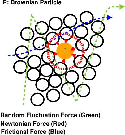 Figure 1 for Estimation of Linear Motion in Dense Crowd Videos using Langevin Model