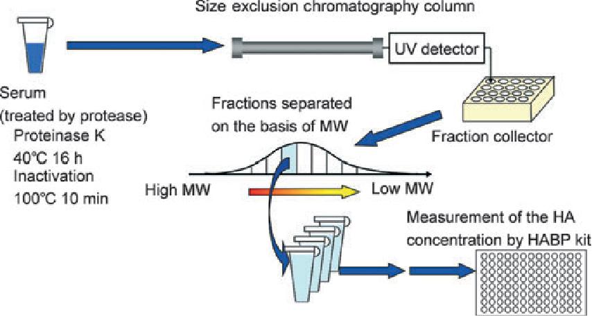 Quantitative measurement of serum hyaluronic acid molecular