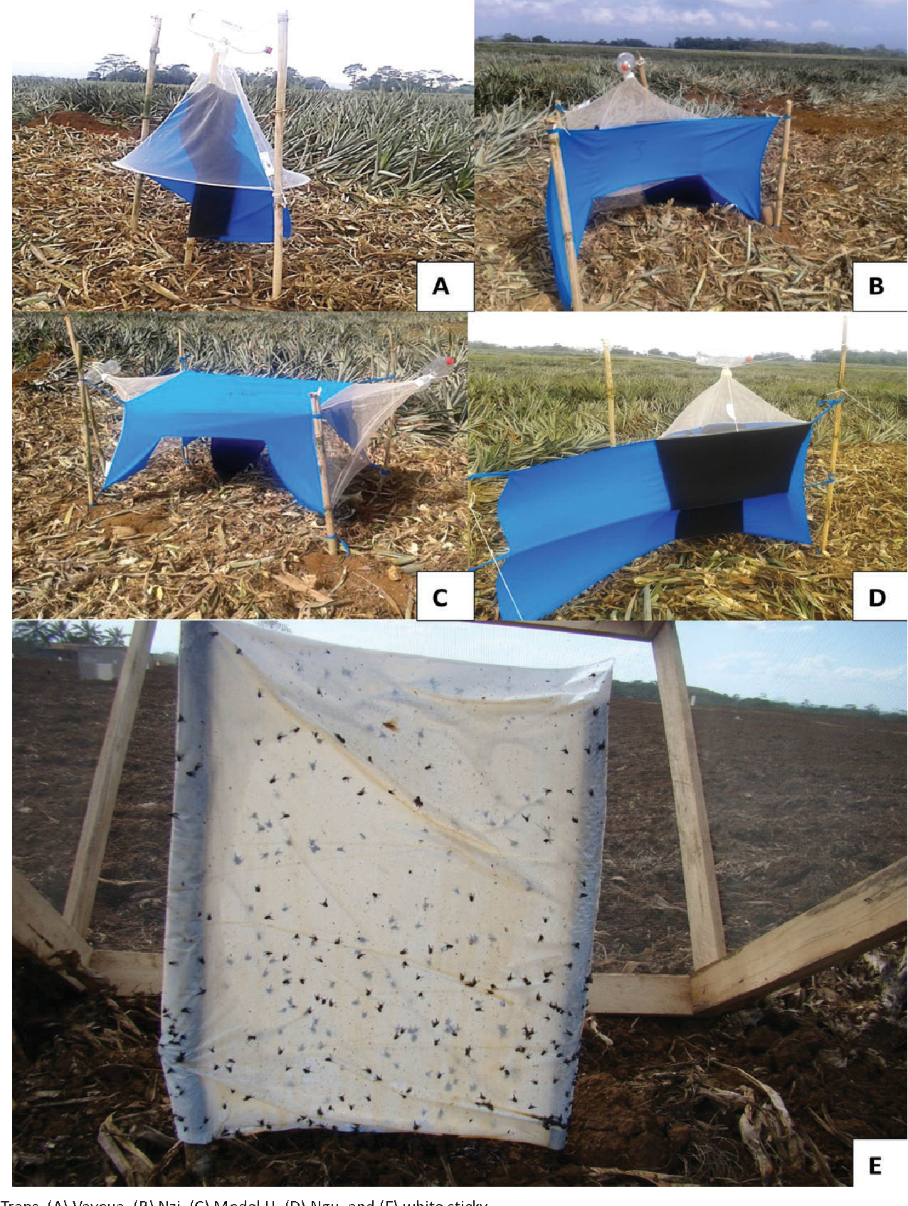 figure 1 & Figure 1 from Biology and Trapping of Stable Flies (Diptera ...