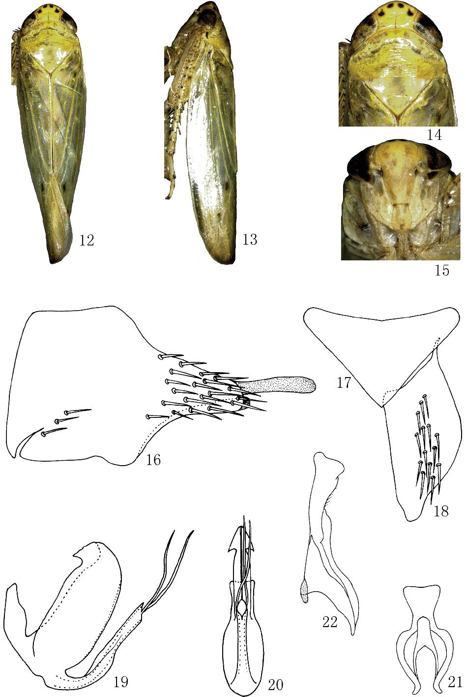 figure 12–22
