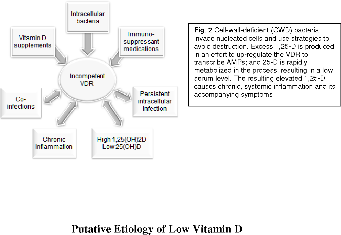 How vitamin d metabolism affects autoimmune and inflammatory figure 2 publicscrutiny Images