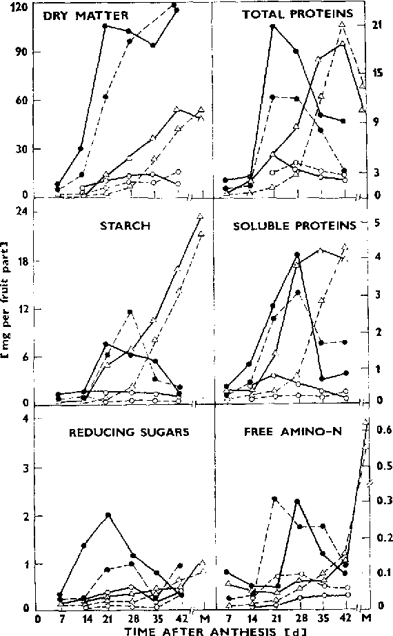 Fig. 1. Changes in the composition of individual fruit parts, i .e. pod wall (0 ) , seed coat (O) and seed (A) in early (AL 15--) and late (T21 . . . . ) developing pigeon pea cultivars.