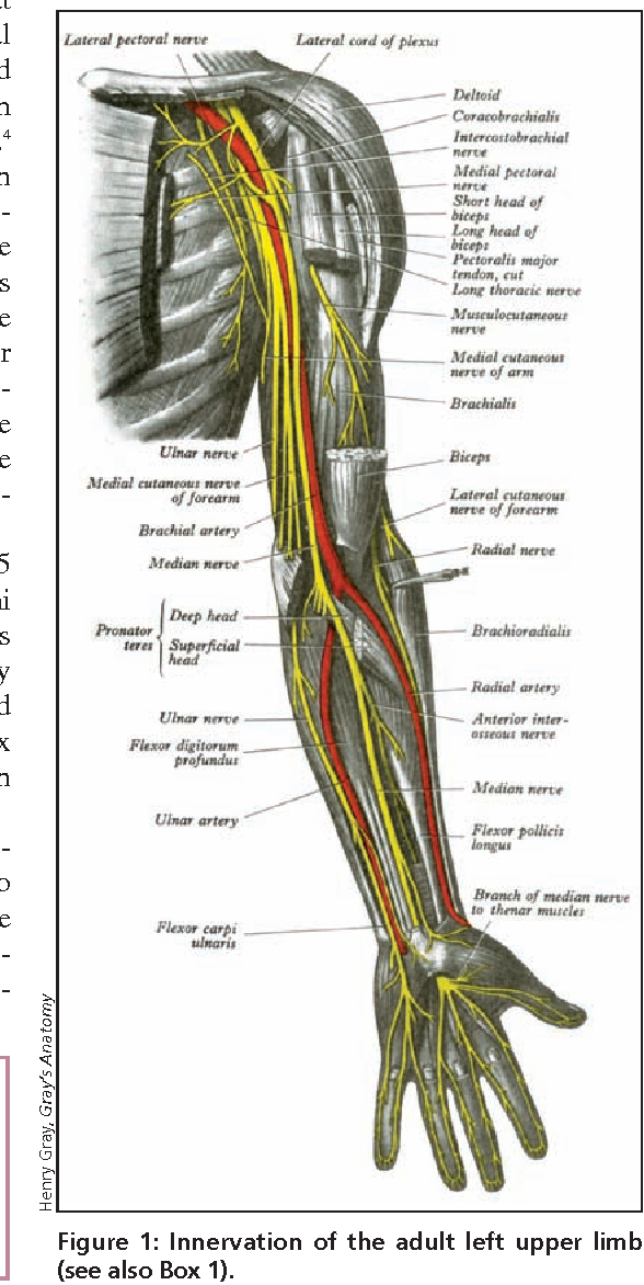 What Is Radial Balance In Art: Figure 1 From Radial Nerve Palsy In The Newborn