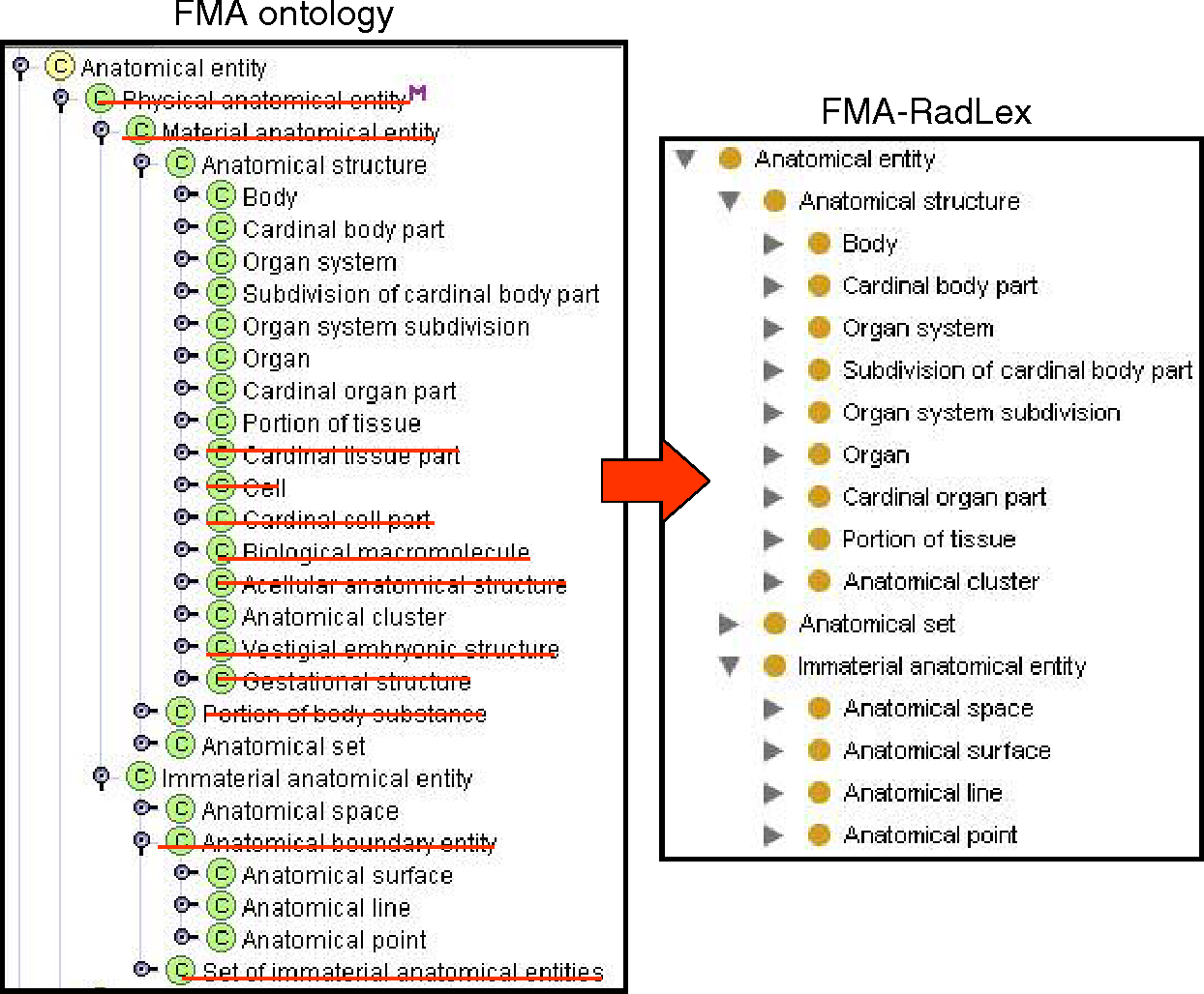 FMA-RadLex: An Application Ontology of Radiological Anatomy derived ...