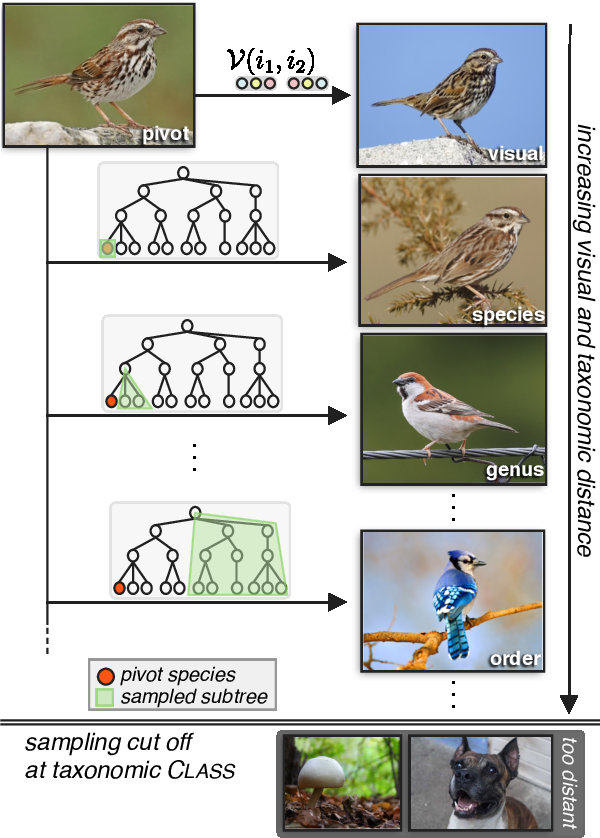 Figure 4 for Neural Naturalist: Generating Fine-Grained Image Comparisons