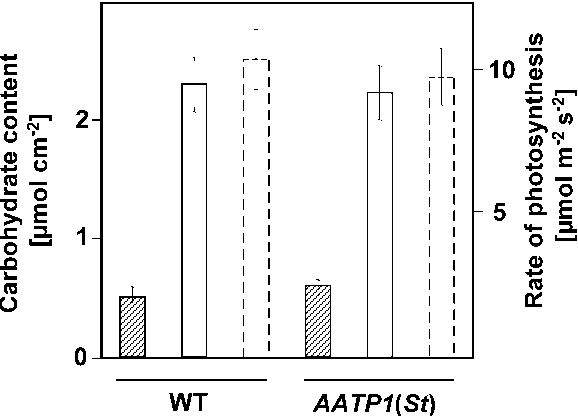 Fig. 5 Content of carbohydrates and rates of photosynthesis in fully developed leaves from wild-type and AATP1(St) anti-sense potato leaf tissue. Photosynthetic rates of fully expanded leaves (6-week-old plants) were measured by infra-red gas analysis. For carbohydrate quantification, leaf discs were taken from mature leaves 8 h into the photoperiod. Hatched columns Soluble sugars (sum of glucose, fructose and sucrose), open columns starch in C6 units, open columns with broken outlines rates of CO2 fixation. Data are means of three independent experiments ± SD