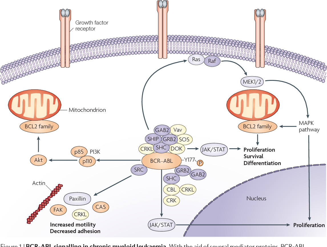 Flying under the radar: the new wave of BCR-ABL inhibitors