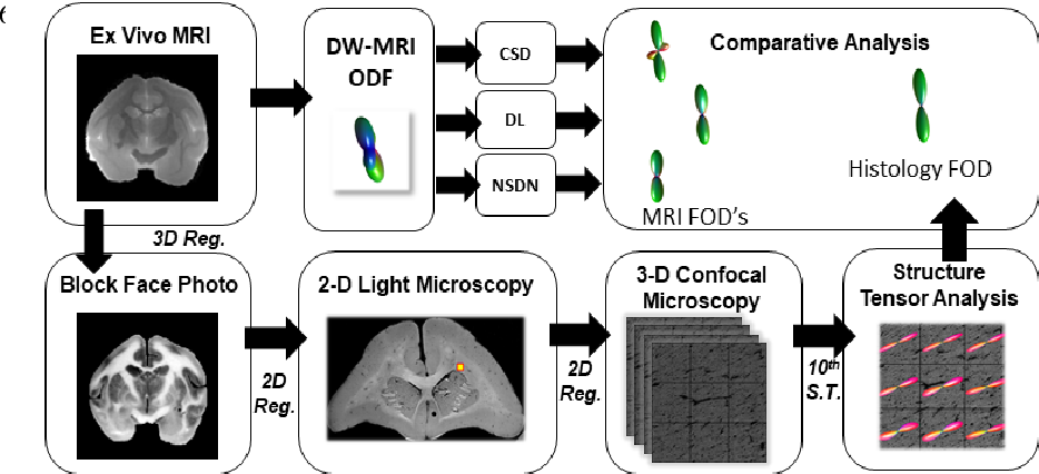 Figure 1 for Inter-Scanner Harmonization of High Angular Resolution DW-MRI using Null Space Deep Learning