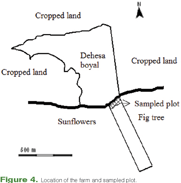 Figure 4. Location of the farm and sampled plot.