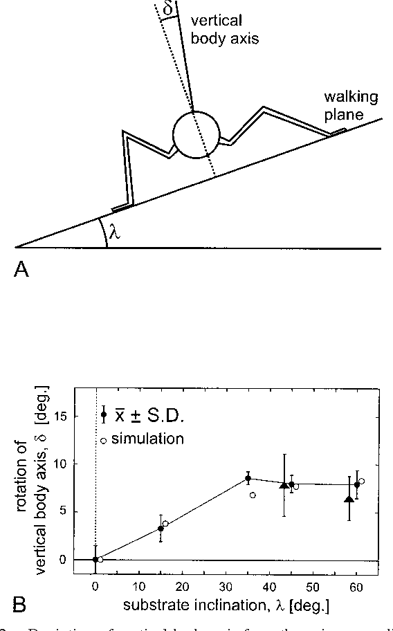 Figure 2 From Stick Insects Walking Along Inclined Surfaces