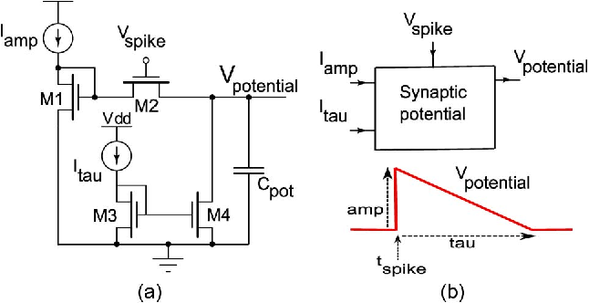 Fig. 3. (a) Synaptic potential (decay) circuit. (b) Synaptic potential module. The output of this module is a decay function, whose time constant and amplitude are controlled by Itau and Iamp, respectively. The decay starts once a pre/post spike arrives.