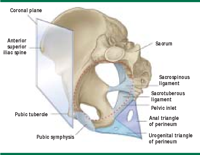 Contemporary Views On Female Pelvic Anatomy Semantic Scholar