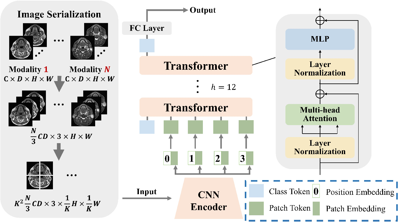 Figure 3 for TransMed: Transformers Advance Multi-modal Medical Image Classification