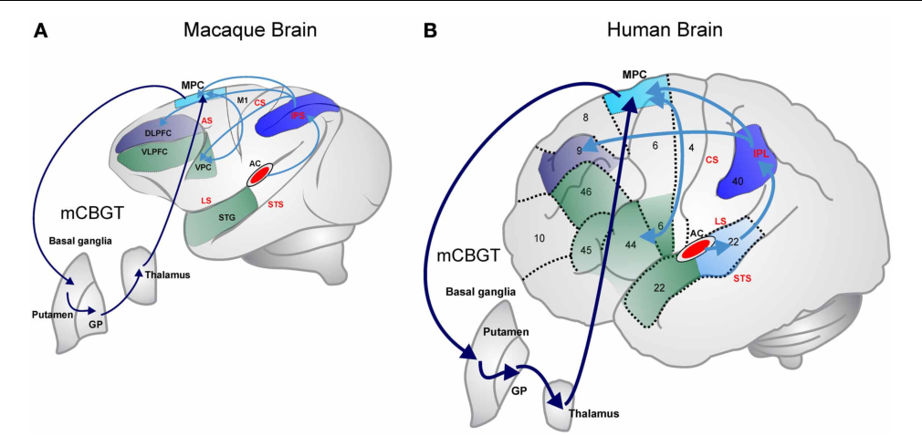 Figure 1 from uva dare digital academic repository are non human figure 1 gumiabroncs Images