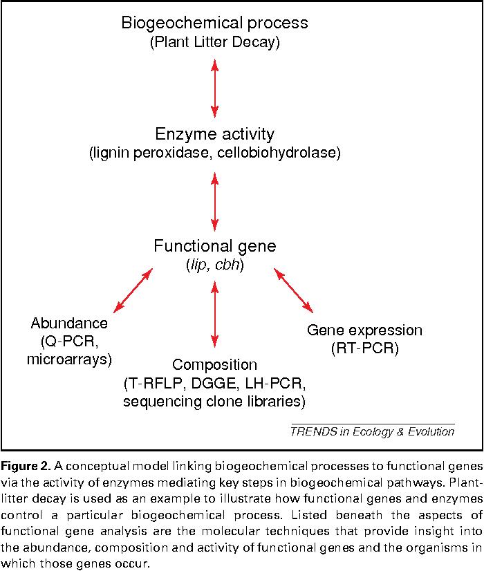 Figure 2 from A molecular dawn for biogeochemistry  - Semantic Scholar