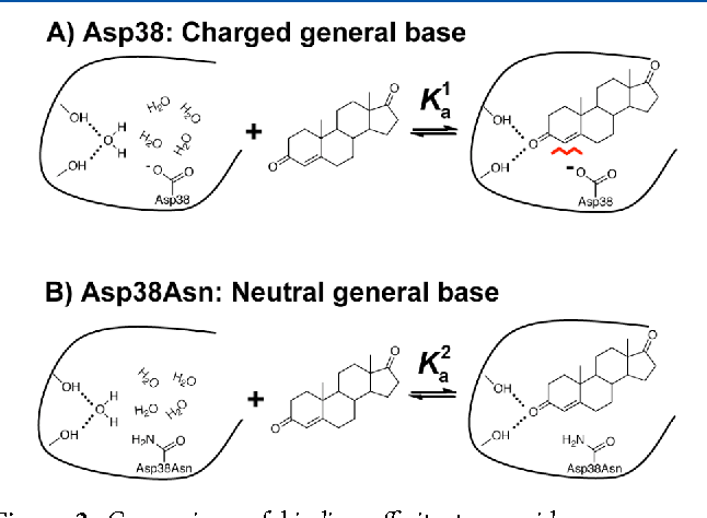 Figure 2. Comparison of binding affinity to provide a measure of ground state destabilization from close positioning of the charged general base and hydrophobic steroid substrate. Unfavorable interactions between the ionized general base and 4-AND, a ground state analogue (A, red line), are predicted to weaken binding to KSI relative to the Asp38Asn mutant (B).
