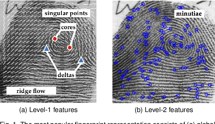 Figure 1 for Learning a Fixed-Length Fingerprint Representation