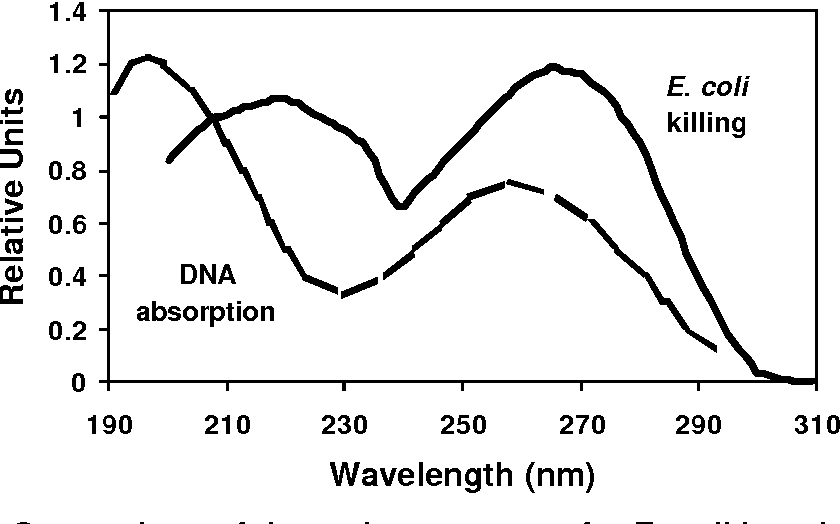 Figure 4. Comparison of the action spectrum for E. coli inactivation to the absorption spectrum of nucleic acids
