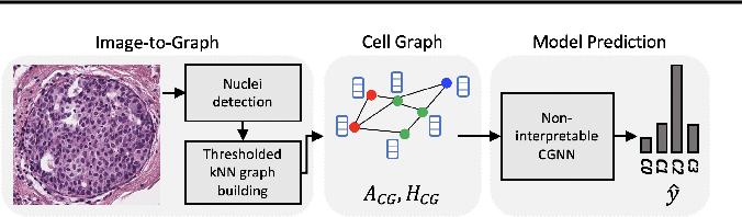 Figure 1 for Towards Explainable Graph Representations in Digital Pathology