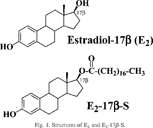 Fig. 1. Structures of E2 and E2-17b-S.