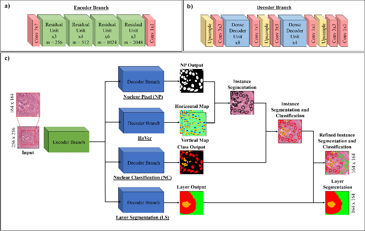 Figure 1 for Simultaneous Nuclear Instance and Layer Segmentation in Oral Epithelial Dysplasia