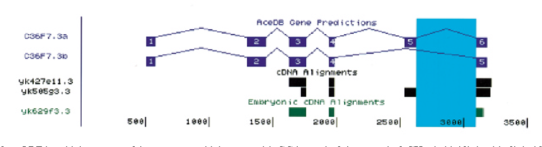 Figure 3. Display of an ORF in which an unusual intron—one which starts with GC instead of the canonical GU—is highlighted in light blue. EST evidence for alternative splicing of this gene is also shown.
