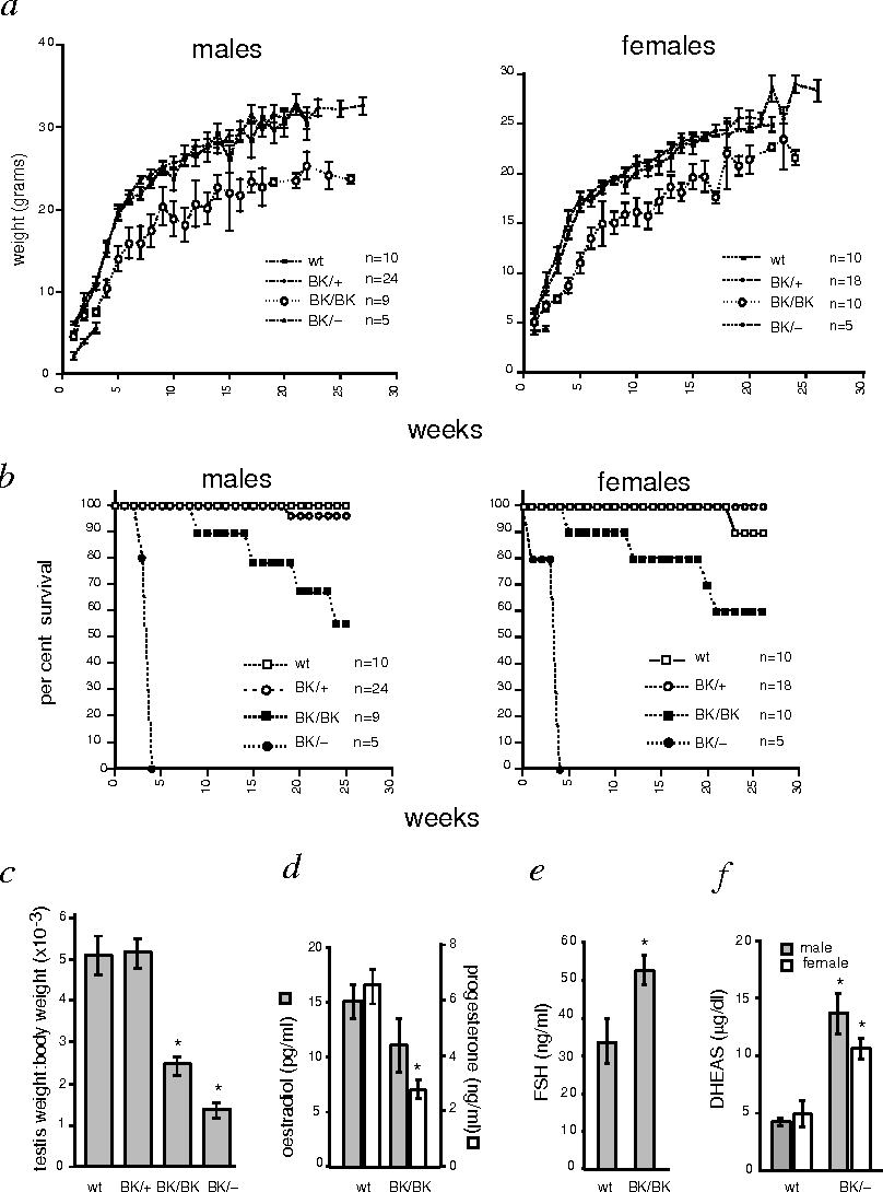 Fig. 5 Growth characteristics, survival and serum analysis of wild-type and mutant mice. a, The weights (mean±s.e.m.) of male and female wild-type (wt), Inhba+/BK, InhbaBK/BK and InhbaBK/– mice were measured for 26 weeks. Male and female InhbaBK/BK mice were smaller than both wild-type and Inhba+/BK mice, which had indistinguishable growth patterns. InhbaBK/– mice were smaller than all other groups and were included for only three weeks because of the lethality associated with the genotype. b, Survival curves plotted over a 26-week period. Both male and female InhbaBK/BK and InhbaBK/– mice showed decreased survival relative to wild-type mice, influenced by the dosage of the InhbaBK allele. The survival of Inhba+/BK mice was comparable to that of wildtype mice, confirming that the lethality associated with the insertion was not due to a dominant effect of the allele. c, The testes of three-week wild-type and mutant mice (n= 4–6) were weighed. Because the body weights differed significantly among the groups, testis to body weight ratios were determined. Both InhbaBK/BK and InhbaBK/– mice had smaller testes than did controls. There were no significant differences between the testis weights of wild-type and Inhba+/BK mice. d,e,f, Radioimmunoassay analysis of oestradiol (n=5–8), progesterone (n=5–11), FSH (n=6–9) and DHEAS (n=4–7) in the serum (mean±s.e.m.) of wild-type and mutant mice. Asterisks denote values that were significantly different from control mean values (Student's two-tailed t-test, P<0.05). Oestradiol and progesterone levels were determined in randomly cycling adult female mice. FSH levels were from adult male mice.