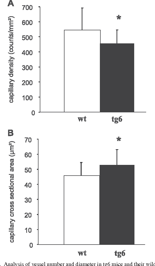 Fig. 1. Analysis of vessel number and diameter in tg6 mice and their wild-type (wt) littermates. Capillary density was reduced by 16% (A), whereas capillary diameter was increased 15% (B) in tg6 mice. Values are means SD (n 4). *P 0.05 (by 2-tailed Student's t-test of independent samples with equal variance).